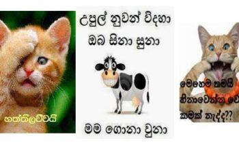 Sinhala Facebook Photo Comment 1000+