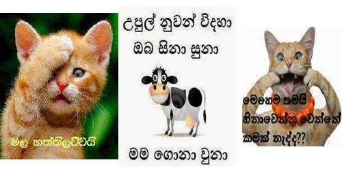 Sinhala Facebook Photo Comment 1000+